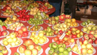 Just one table of apple varieties, Big Apple 04