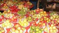 Just one table of apple varieties, Big Apple 04