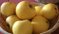 Yellow Ingestre